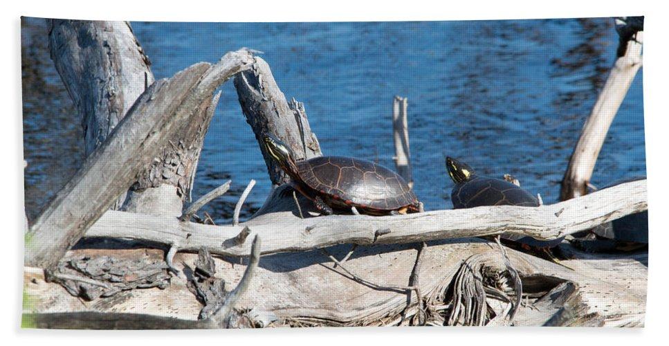 Nature Bath Sheet featuring the photograph Soaking The Sun by Linda Kerkau