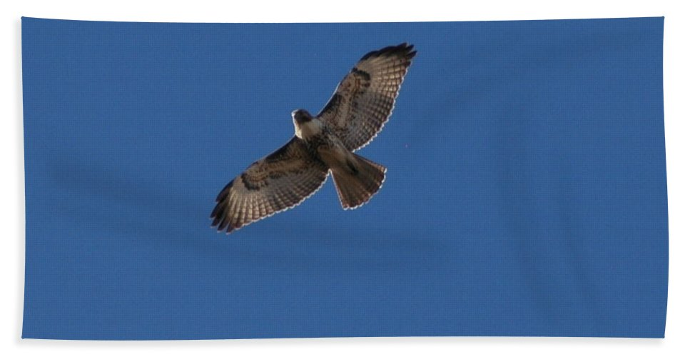Large Hand Towel featuring the photograph Soaring High by Teresa Stallings