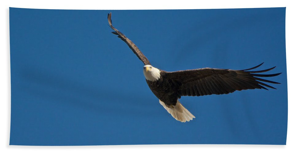 Eagle Hand Towel featuring the photograph Soaring by Linda Shannon Morgan