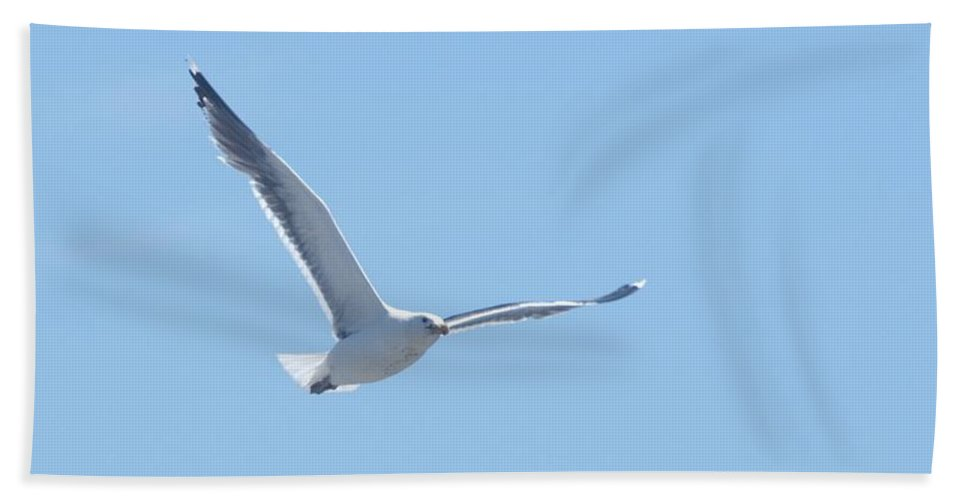 Seagull Bath Sheet featuring the photograph Soaring by Steven Natanson