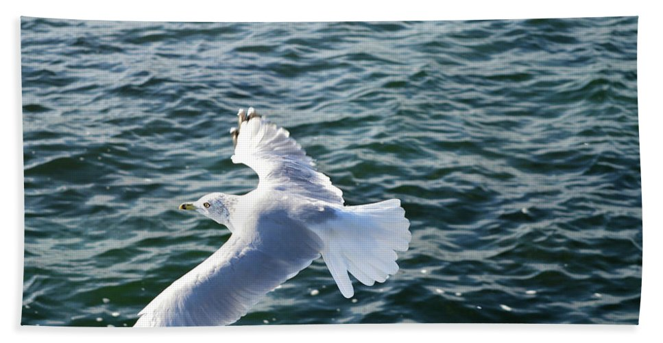 Seagull Hand Towel featuring the photograph Soaring Waters by Darielle Mesmer