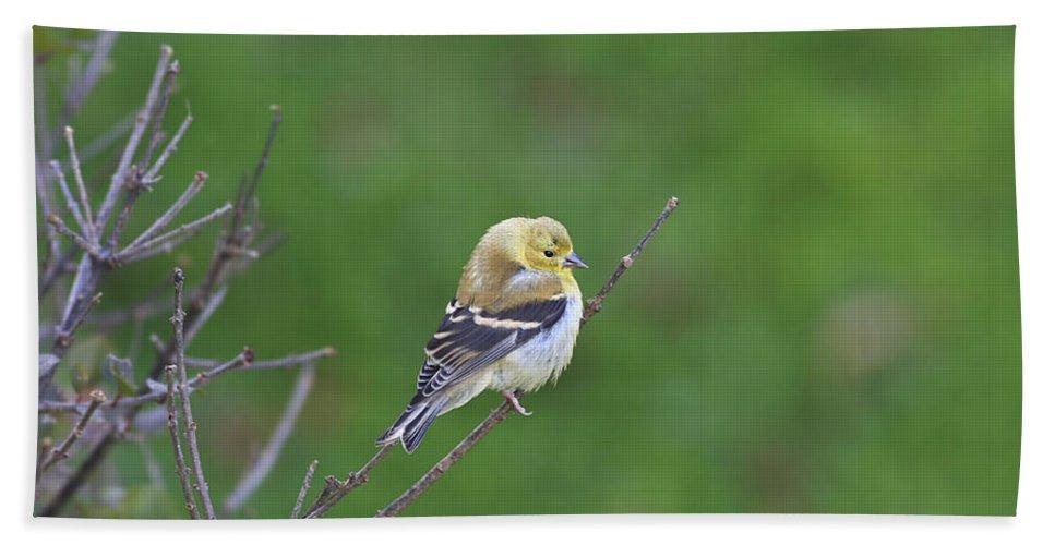 Bird Bath Towel featuring the photograph Soft And Fluffy by Deborah Benoit