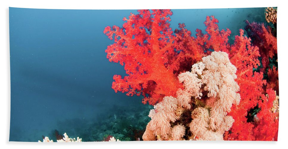 Soft Coral Bath Sheet featuring the photograph Soft Coral by Hagai Nativ