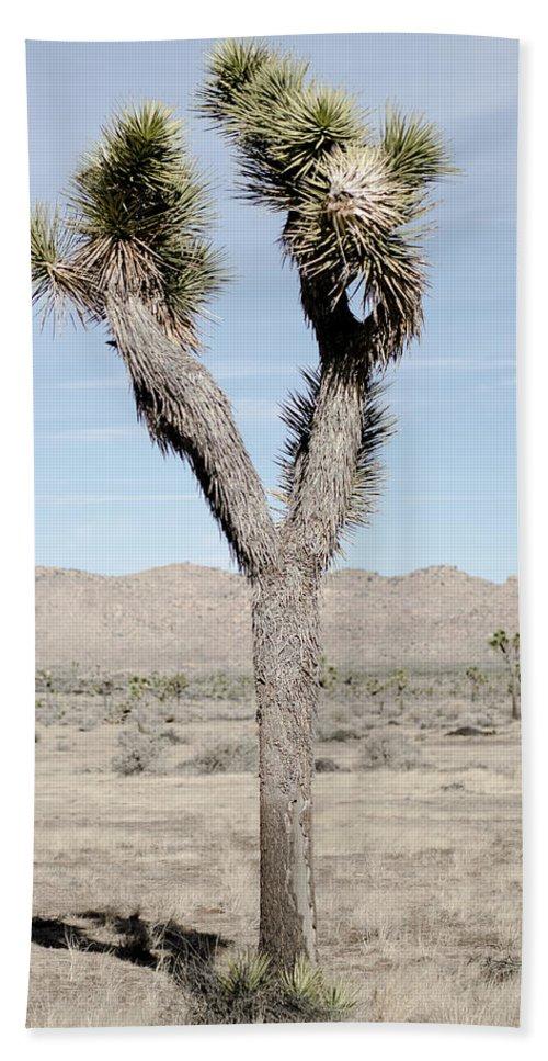 Joshua Tree Hand Towel featuring the photograph Soft Joshua Tree by Alex Snay