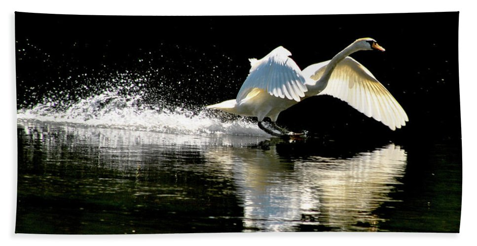 Swan Bath Sheet featuring the photograph Soft Landing by Joe Ormonde