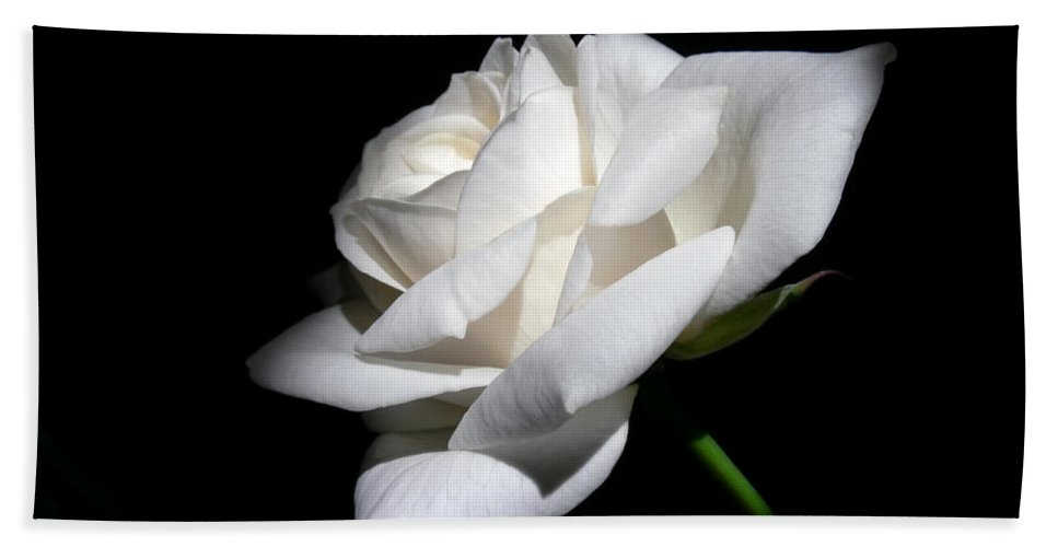 Rose Hand Towel featuring the photograph Soft Light White Rose Flower by Jennie Marie Schell