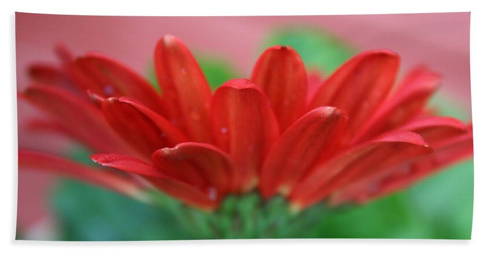 Flowers Bath Sheet featuring the photograph Soft Red by Linda Sannuti