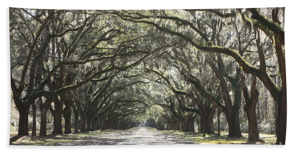 Live Oaks Bath Sheet featuring the photograph Soft Southern Day by Carol Groenen