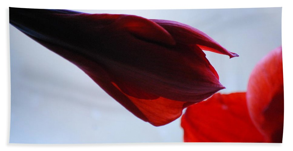 Amaryllis Hand Towel featuring the photograph Soft Touch by Lori Tambakis