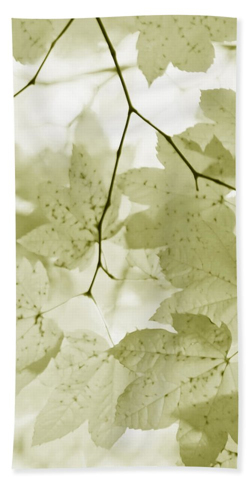 Leaf Hand Towel featuring the photograph Softness Of Olive Green Maple Leaves by Jennie Marie Schell