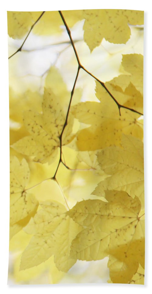 Leaf Hand Towel featuring the photograph Softness Of Yellow Leaves by Jennie Marie Schell