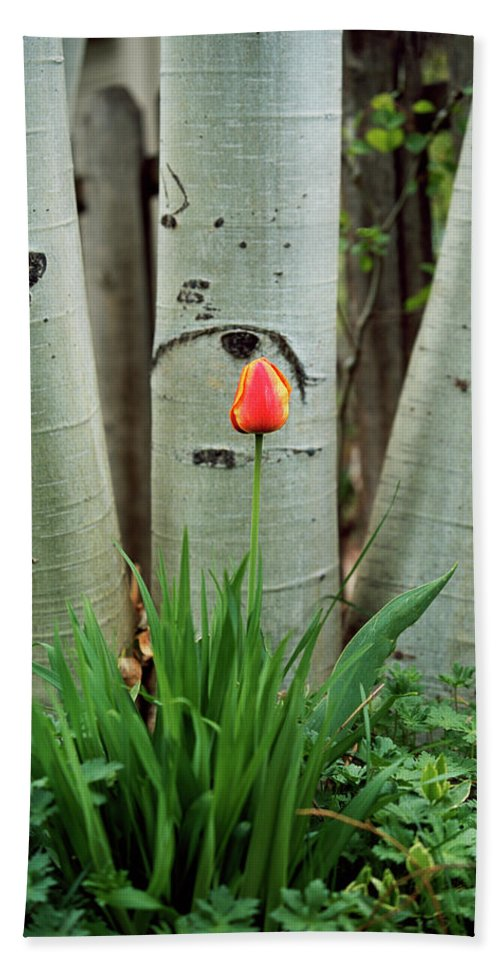 Flower Hand Towel featuring the photograph Solace by Jim Benest