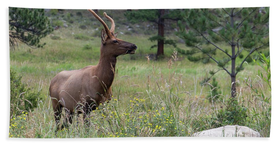 Elk Hand Towel featuring the photograph Solitude by Jeff Bord