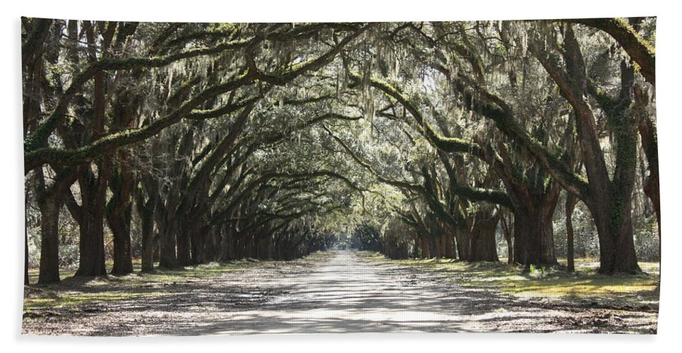 Live Oaks Hand Towel featuring the photograph Southern Road by Carol Groenen