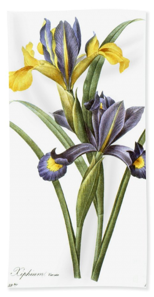 1833 Hand Towel featuring the photograph Spanish Iris by Granger