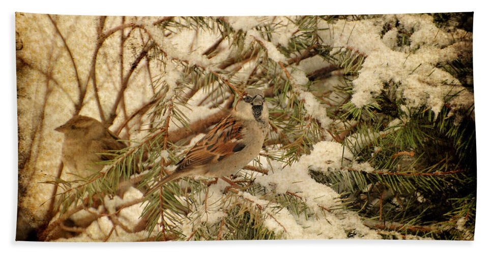 Birds Hand Towel featuring the photograph Sparrow In Winter Iv - Textured by Angie Tirado