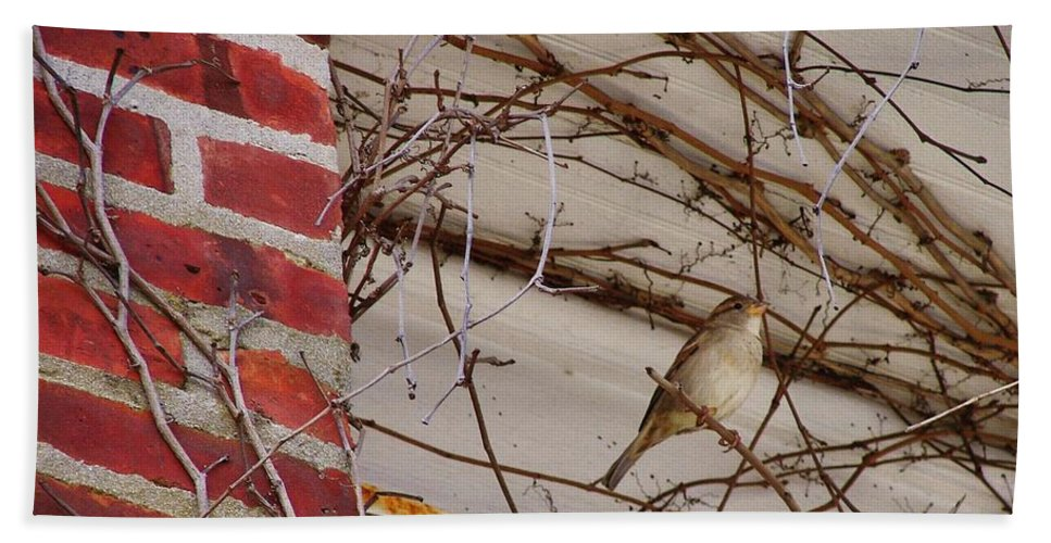 Sparrow Bath Sheet featuring the photograph Sparrow by JAMART Photography