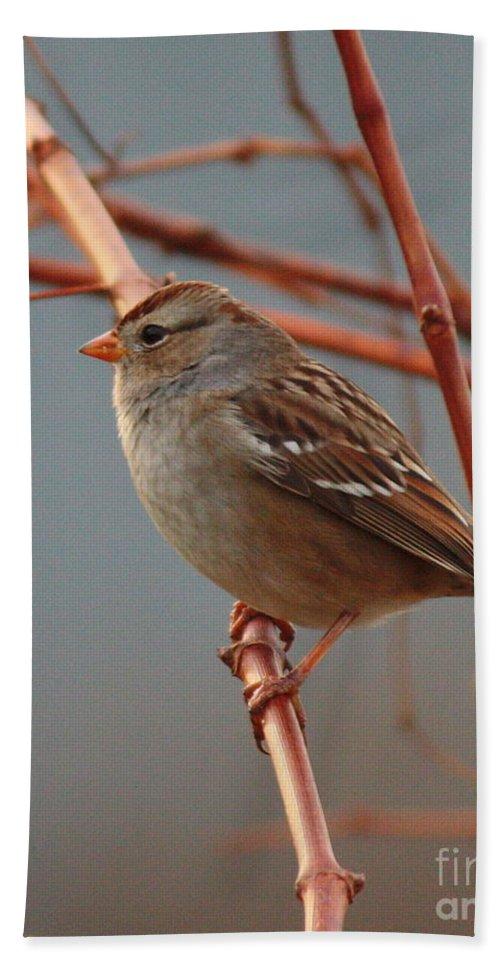 Bird Hand Towel featuring the photograph Sparrow On Grape Vine by Carol Groenen