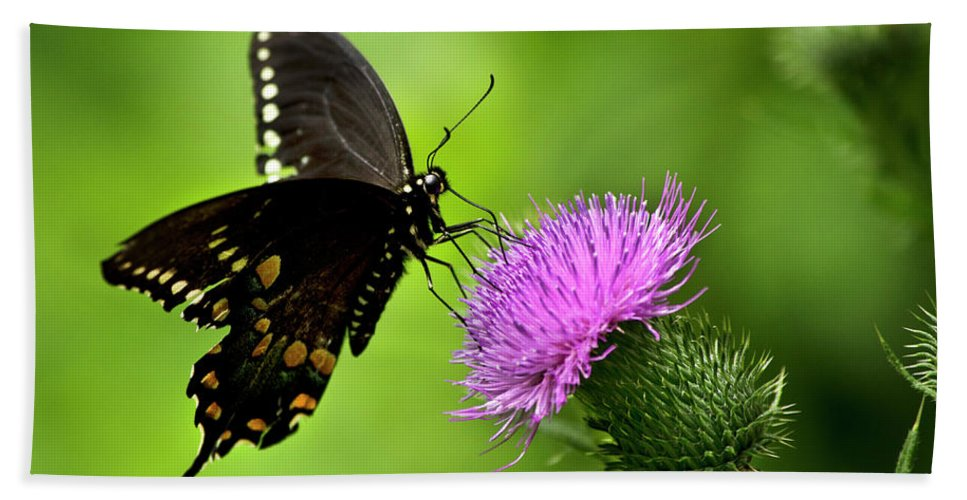 Butterfly Bath Sheet featuring the photograph Spicebush Swallowtail Butterfly by Christina Rollo