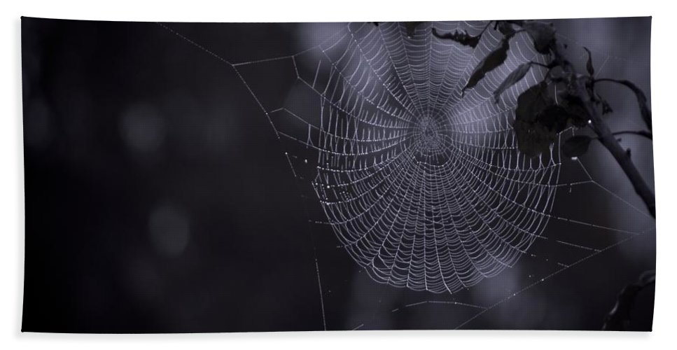 Spider Hand Towel featuring the photograph Spider Art by Danielle Silveira