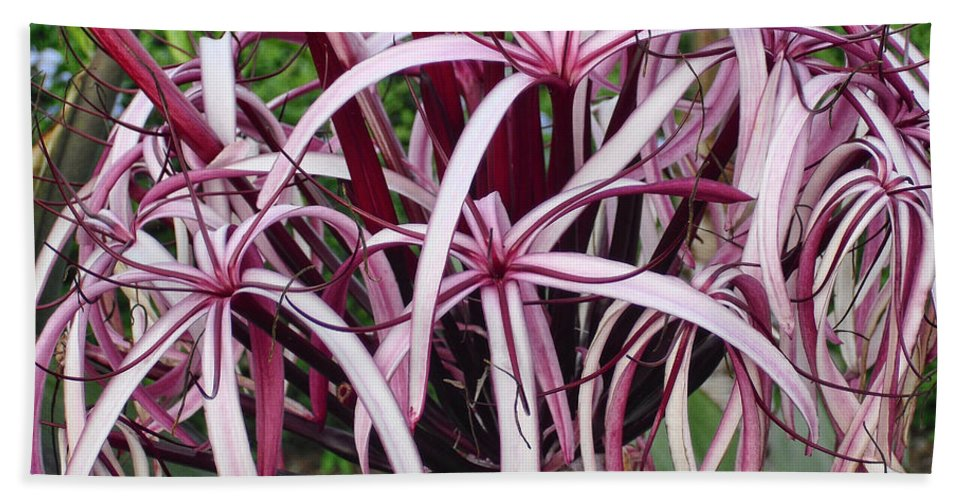 Flowers Hand Towel featuring the photograph Spider Lily by Athala Carole Bruckner