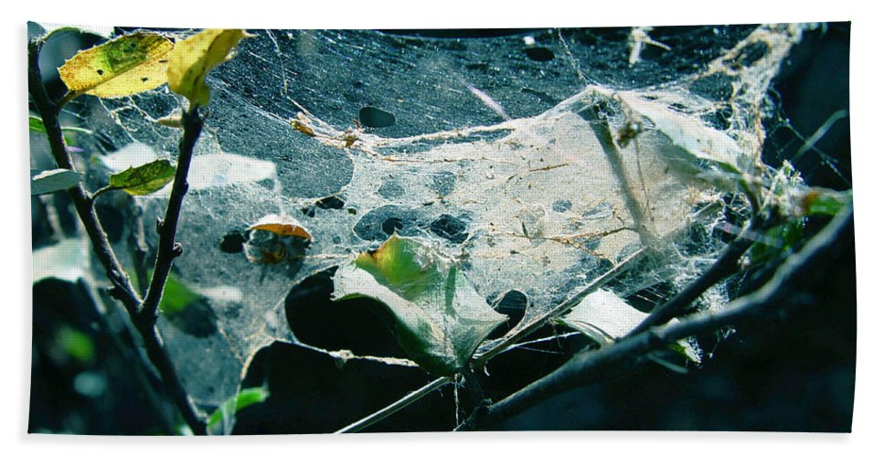 Spider Bath Towel featuring the photograph Spider Web by Peter Piatt
