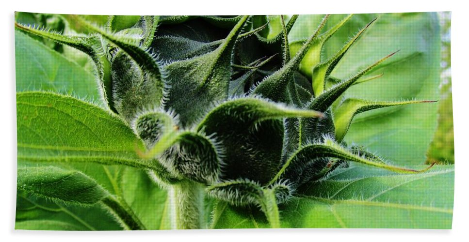 Sunflower Photographs Hand Towel featuring the photograph Spike by Rosita Larsson