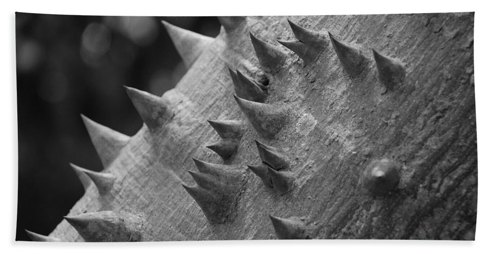 Spike Bath Towel featuring the photograph Spikey Thorny Tree by Rob Hans