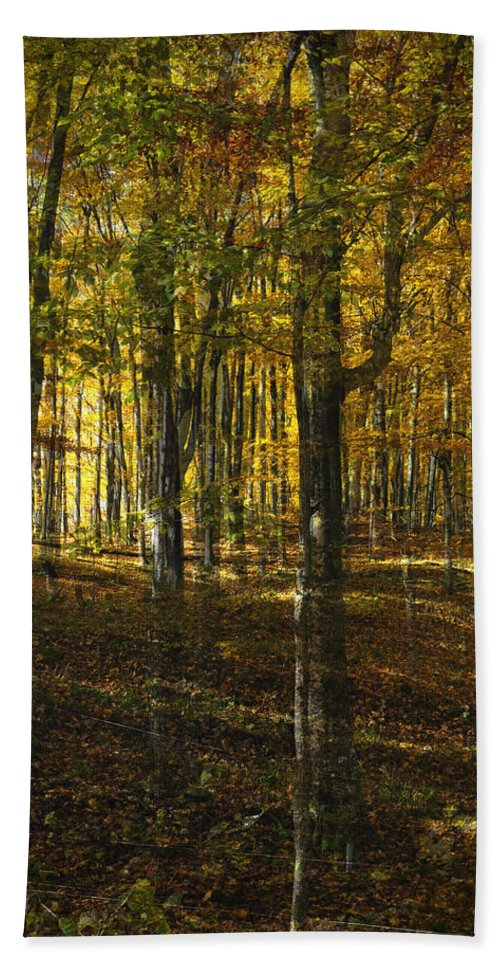 Woods Hand Towel featuring the photograph Spirits In The Woods by Tim Nyberg