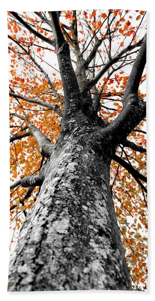 Tree Bath Sheet featuring the photograph Splash Of Color by Greg Fortier