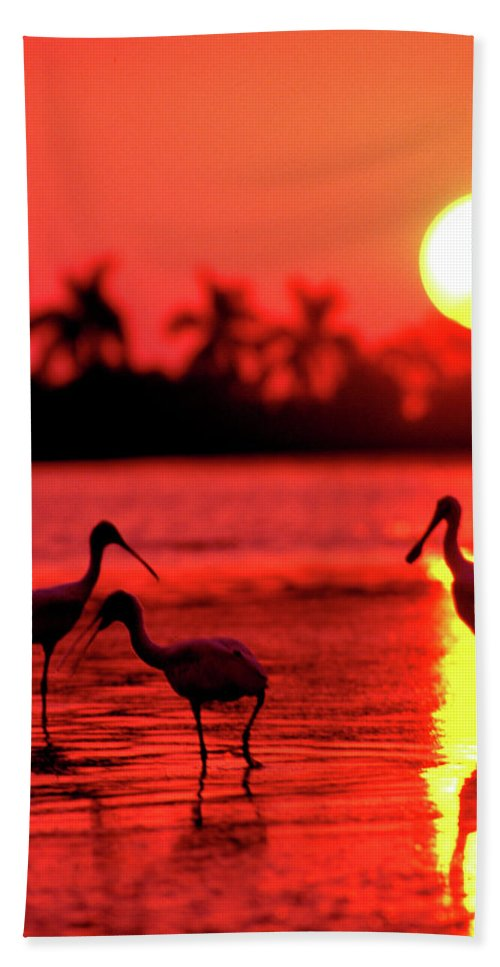 Portrait Bath Sheet featuring the photograph Spoonbills At Sunset by Jim Sweitzer