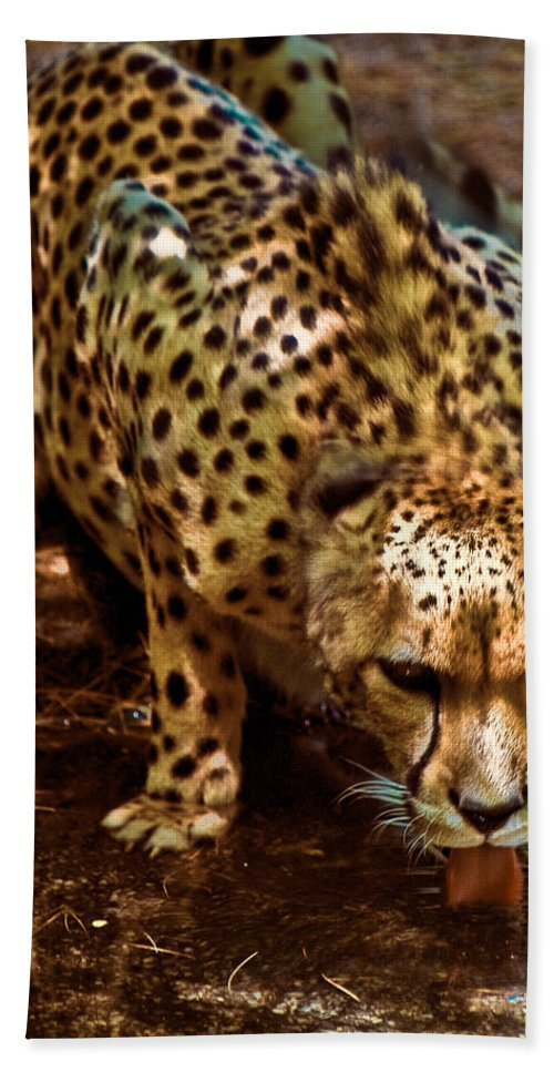Cheetah Hand Towel featuring the photograph Spots by Chris Lord