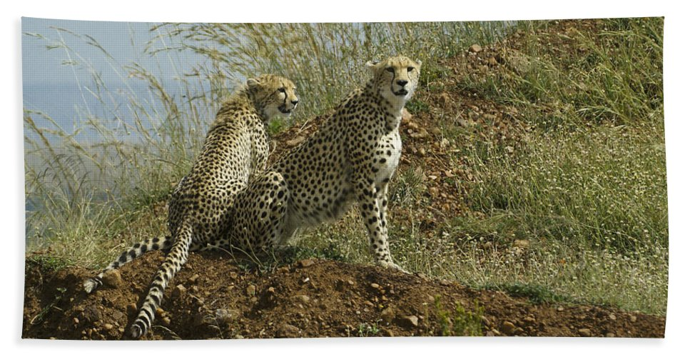 Africa Hand Towel featuring the photograph Spotted Cats by Michele Burgess