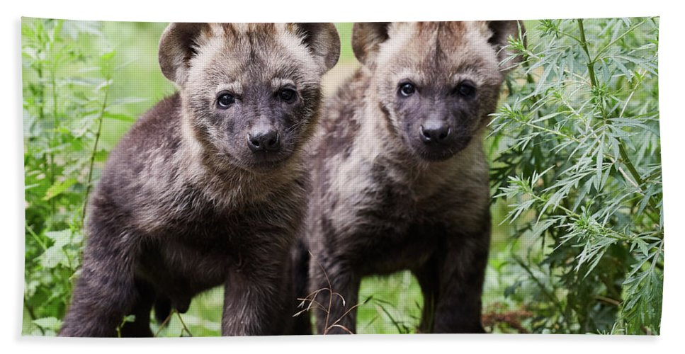 Two Bath Sheet featuring the photograph Spotted Hyena Cubs I by Nick Biemans