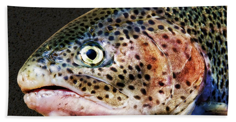 Fish Bath Sheet featuring the photograph Spotted by Kelley King