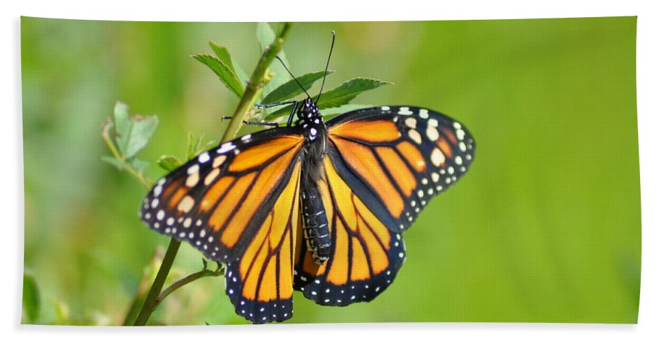 Butterfly Bath Sheet featuring the photograph Spread Your Wings by Bill Cannon