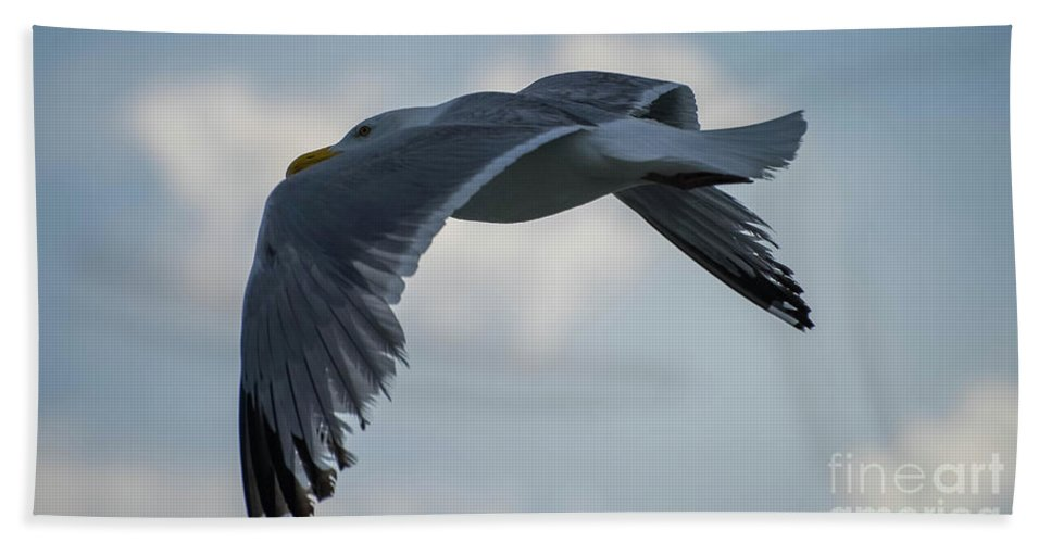 Seagull Bath Sheet featuring the photograph Spread Your Wings by Debbie Morris