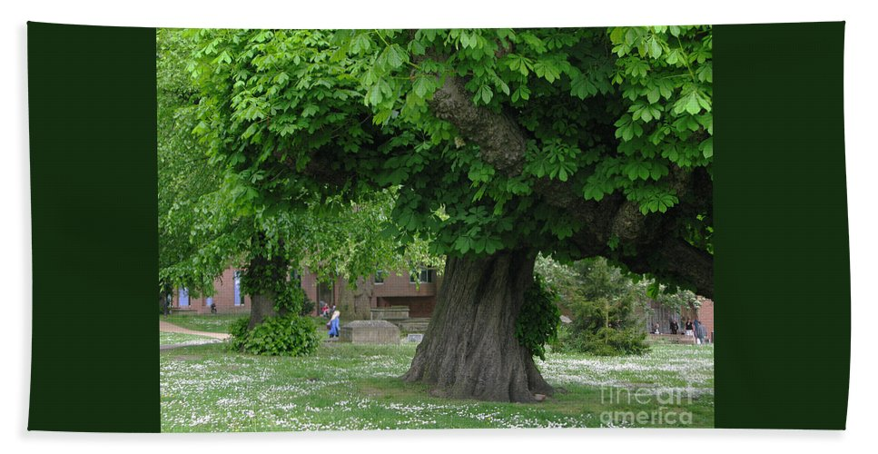 Horse Chestnut Hand Towel featuring the photograph Spreading Chestnut Tree by Ann Horn