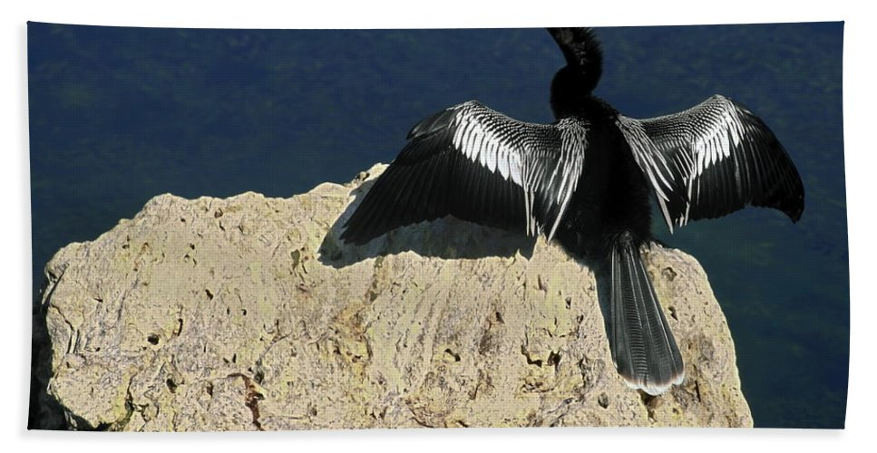 Anhinga Hand Towel featuring the photograph Spreading My Wings by Sally Weigand