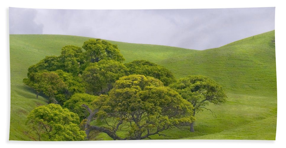 Landscape Hand Towel featuring the photograph Spring At Del Valle by Karen W Meyer