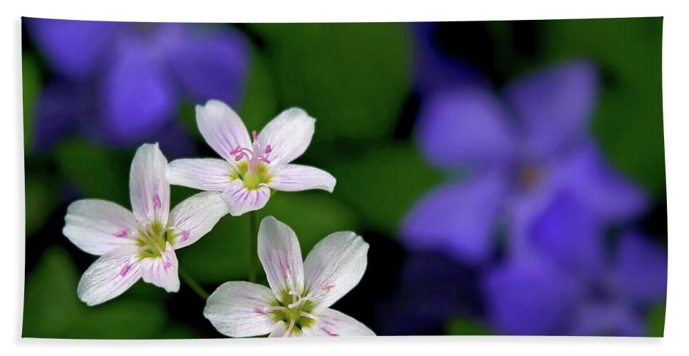 Spring Beauty Bath Sheet featuring the photograph Spring Beauties by Carolyn Derstine