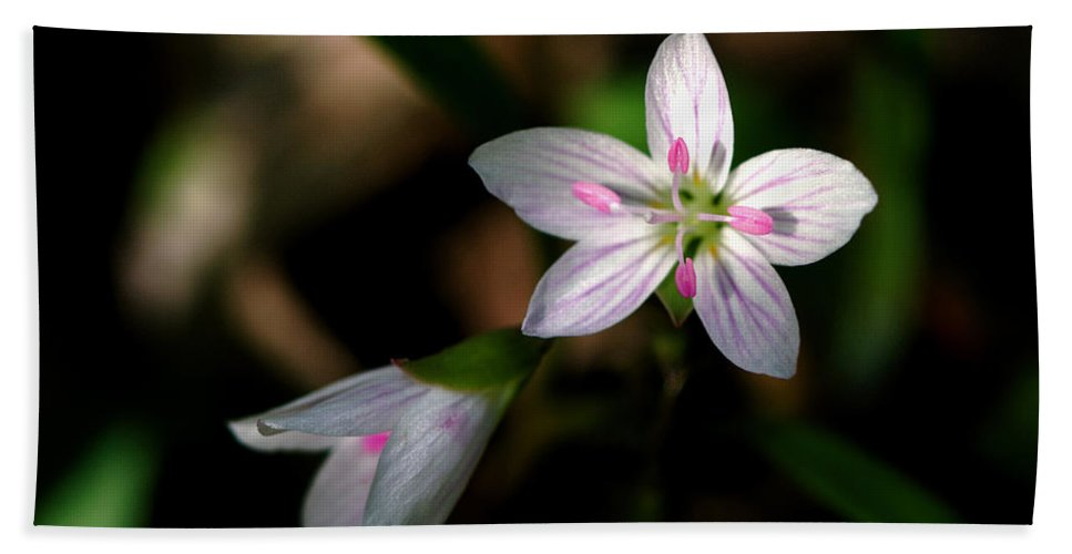 Spring Hand Towel featuring the photograph Spring Beauty by Jack R Perry