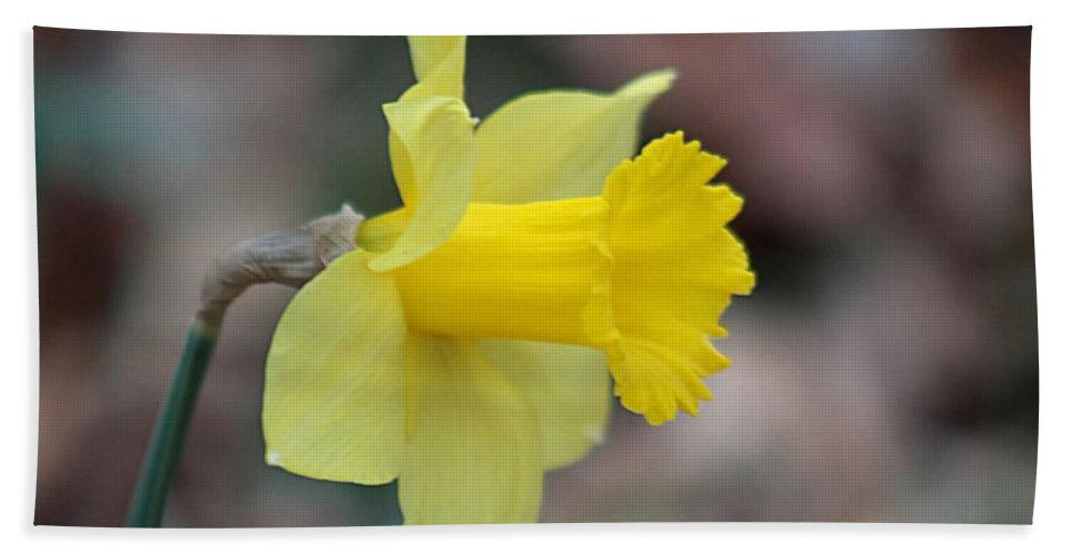 Daffodil Hand Towel featuring the photograph Spring Beauty by Linda Crockett