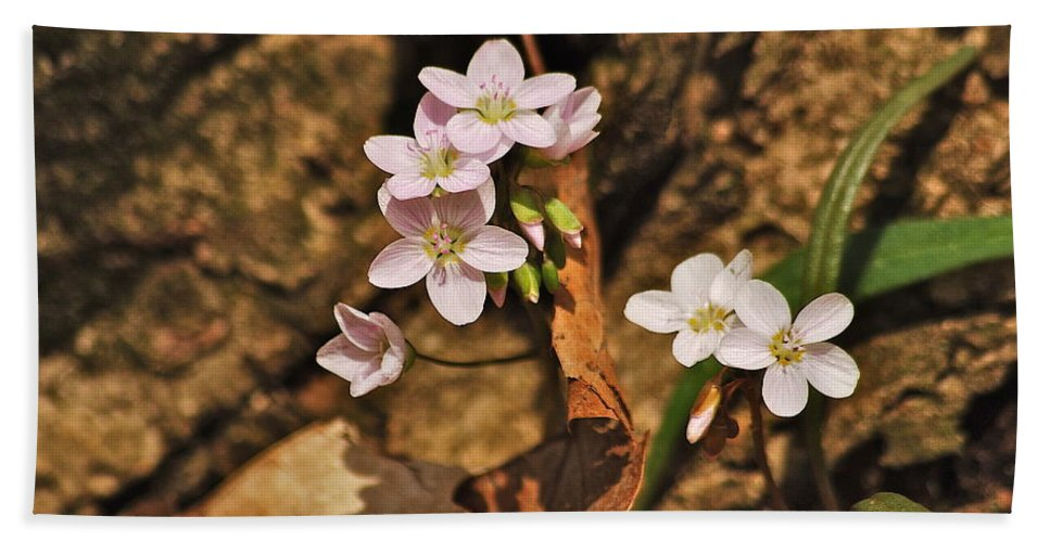Spring Hand Towel featuring the photograph Spring Beauty by Michael Peychich