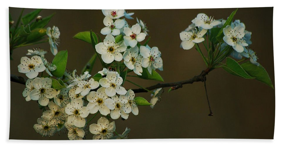 Spring Bath Sheet featuring the photograph Spring Blossoms by Jenny Gandert