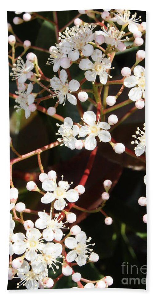Spring Bath Sheet featuring the photograph Spring Blossoms Macro by Carol Groenen