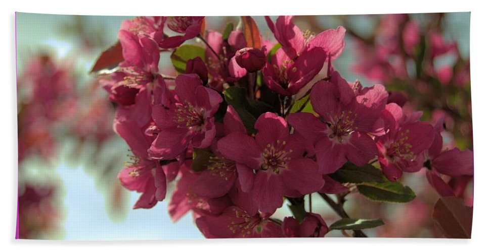 Pink Hand Towel featuring the photograph Spring Blossoms by Wendy Fox