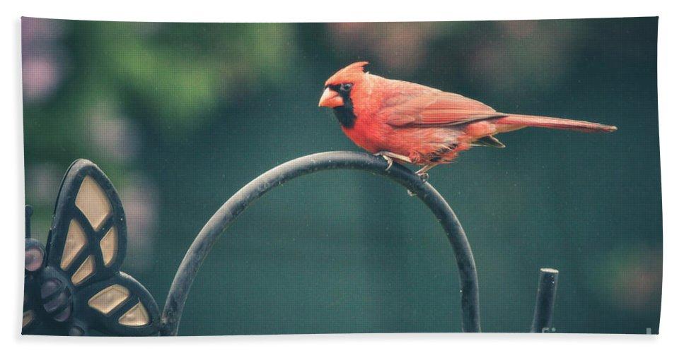 Spring Bath Sheet featuring the photograph Spring Cardinal by Viviana Nadowski