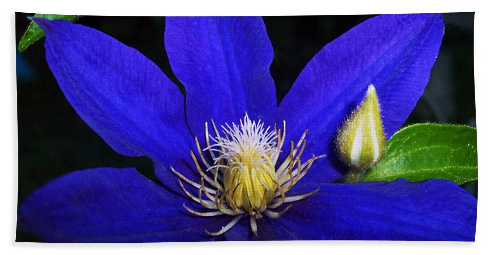 Spring Bath Sheet featuring the photograph Spring Clematis by Terry Anderson