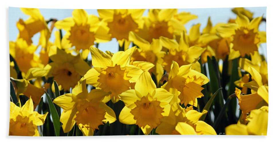 Daffodils London Hand Towel featuring the photograph Spring Daffodils by Julia Gavin
